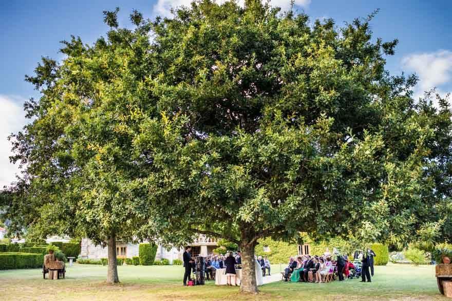 Ceremonia civil de boda bajo el árbol centenario del Pazo da Touza de Nigrán